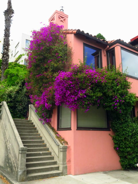 Brightly colored bougainvillea and paint job on a Telegraph Hill residence. San Francisco, United States, North America.