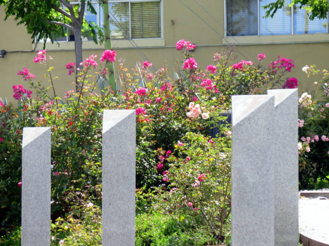 Everything's pink at Pink Triangle Park. Even the roses. San Francisco, United States, North America.