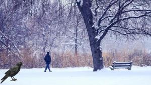 ABD'de kar fırtınası telaşı: 'İnsanlar ciddiye almalı'