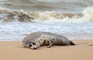Bilim İnsanları Uyardı: 'Hazar Denizi İklim Krizi Nedeniyle Küçülebilir'