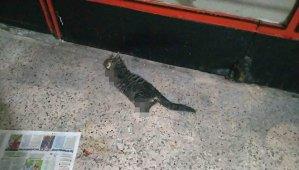 Hayvanlara Yapılan Katliam Durmuyor: Pasaj İçinde Dört Ayağı Kesilmiş Bir Kedi Ölüsü Bulundu