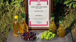 İzmir'de geç olgunlaşan 'çekişte zeytini'nin yağı tescillendi