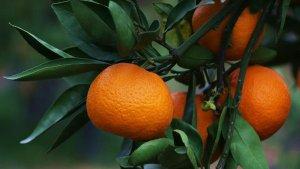 Tarım ürünleri üretici fiyat endeksi kasımda arttı