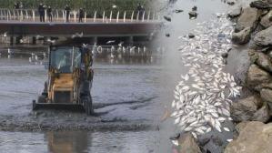 Tonlarca ölü balık topladılar!