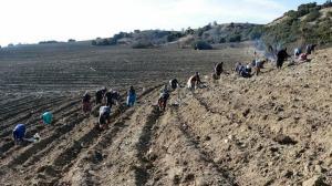 Türkiye'nin en büyük ikinci lavanta bahçesi bin 300 rakımda oluşturuluyor