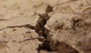 Çin'in doğusunda nadir dinozor fosilleri bulundu