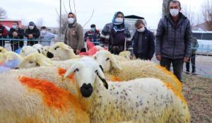 Kazada koyunları telef olmuştu! Vali anında harekete geçti