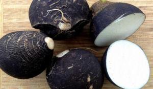 Siyah turpun faydaları nelerdir? Siyah turpla doğal öksürük şurubu nasıl hazırlanır?