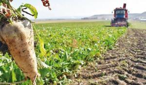 Fahiş fiyatlara karşı sözleşmeli tarım