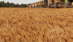 Küresel gıda fiyatları üst üste 8'inci ayda da artış gösterdi