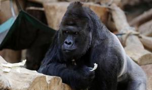 Salgın hayvanat bahçesine sıçradı: İnsanlardakine benzer semptomlar gösteriyorlar