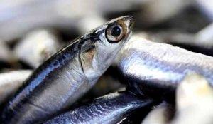 Su ürünleri ihracatında sert artış