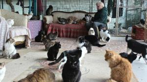 Tam 250 kediyle bir evde yaşıyor