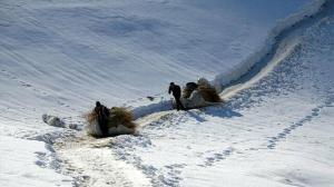 Yazın biriktirip kışın kaydırıyorlar: Soğuk havaya rağmen hayvanlarına dağdan kızakla ot taşıyorlar