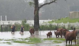 Avustralya'da sel felaketi: Uyarı üzerine uyarı yapılıyor