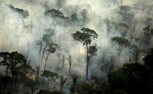 'Dünyanın Akciğerleri' Yok Oluyor: İnsanlar Yağmur Ormanı Örtüsünün Üçte İkisine Zarar Verdi