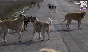 """Elmadağ Belediye Başkanı Aşkın: """"Terk edilen köpeklere biz sahip çıkıyoruz"""""""