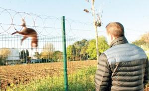 Fethiye'den Örnek Karar: Hayvanlara Zarar Veriyor Diye Jiletli Tel Kullanımı Yasakladı