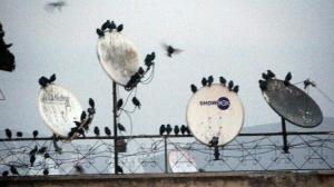 Hakkari'de ilginç görüntü: Binlerce sığırcık merkeze akın etti