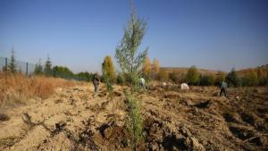 Hatay'da 'Turizm Ormanı' Kurulacak: Hedef 100 Bin Ağaç