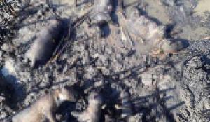 Salihli'de 10 köpek yavrusu yangında öldü!
