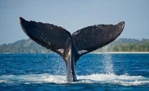 Verilere Göre, Balinalar Hızla Bu Altcoin'i Biriktiriyor