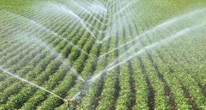 Lise ve Üniversitede Tarım Okuyan Çiftçilere 100 Bin Tl Hibe