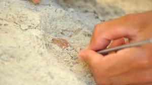Bursa'da tarihi keşif! 'Tüm gerçekler yeniden yazılabilir'