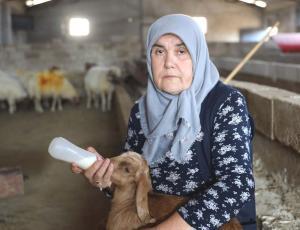 'Kadınsın, Yapamazsın' Demişler: Eşi Ölünce Çiftlik İnşa Edip 600 Hayvana Bakan Gülçin Nine