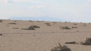 Konya Valiliği, Tuz Gölü'ndeki Flamingo Ölümleriyle İlgili Soruşturma Başlattı