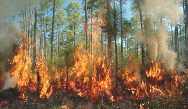 Orman yangınları en çok o üreticileri vurdu! 30 yıllık kayıp