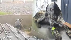 Yer: İstanbul! Civcivlerini kovaladı, köpeğin kafasını sopayla kırdı