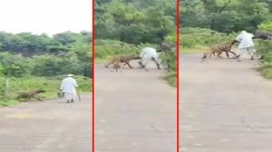 Saniyeler içinde oldu! Çalıların arasından bir anda sıçrayan sırtlan, yolda yürüyen adama saldırdı