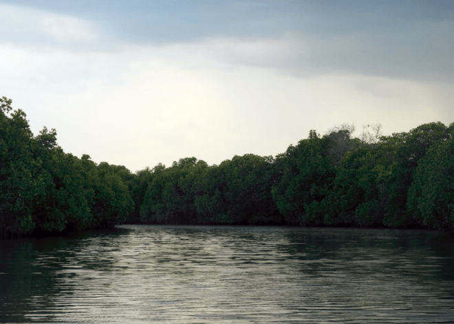The lake at Pichavaram Mangroves