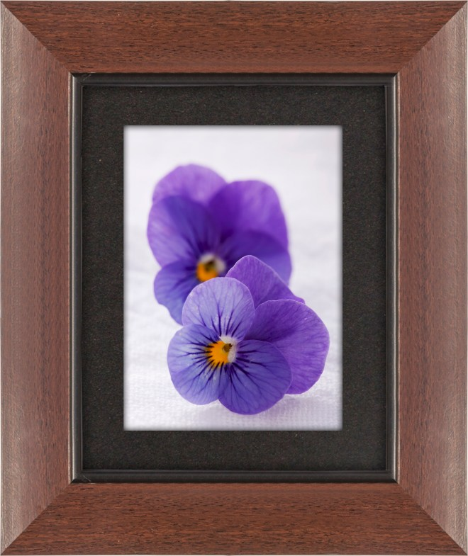 Mahatta Art Galleries -Two purple violas