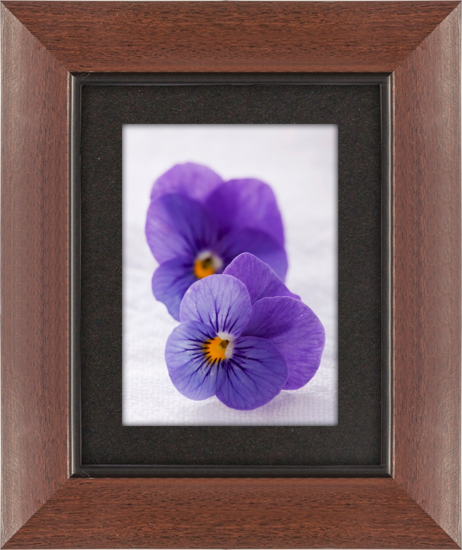 Mahatta Art Galleries -Two purple violas