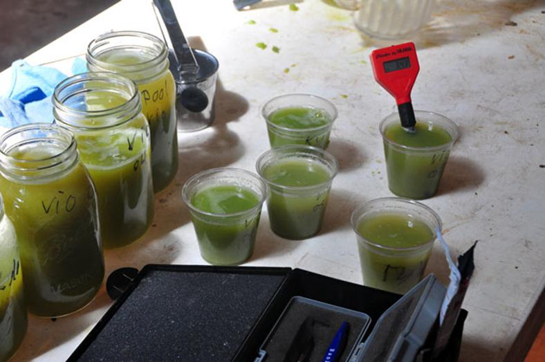 Jars of grapes juice being tested for brix and pH.