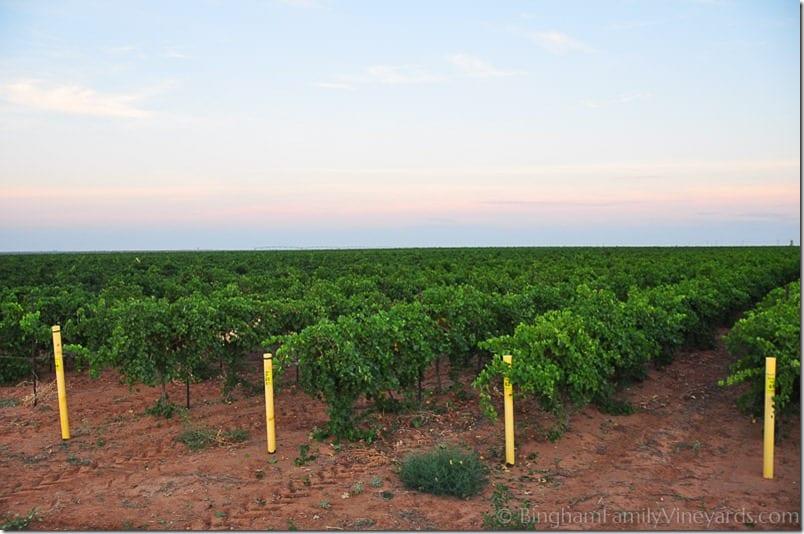 14.08.22_vineyardharvest_010-web