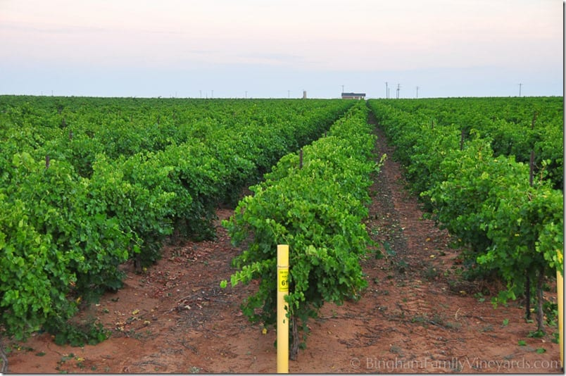 14.08.22_vineyardharvest_012-web
