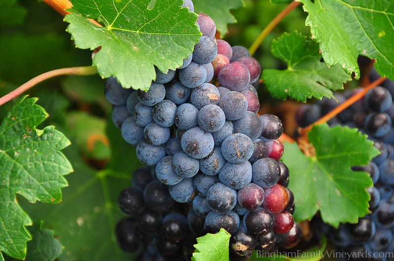 14.08.01_Vineyards_038-web