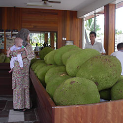 Monstrous Jackfruits, known as <em>nangka</em>
