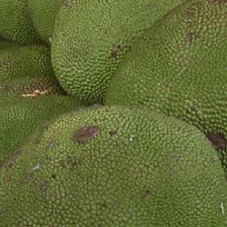 Close-up of Jackfruit rind