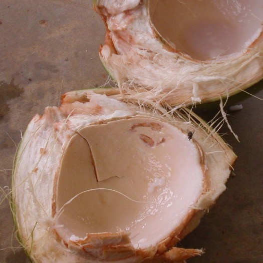 tender coconut meat
