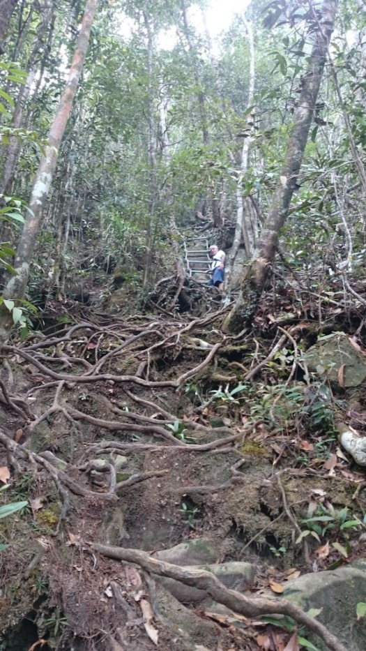 Rugged roots