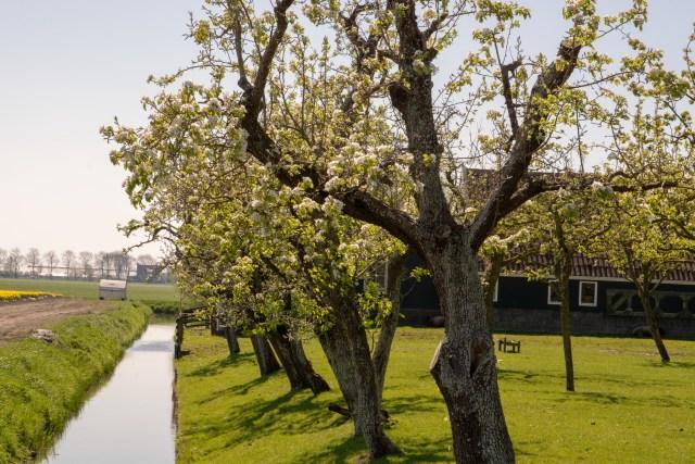 Beemster in Beeld - Westdijk/Schermerhornerweg
