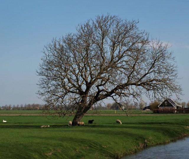 Beemster in Beeld - Jisperweg