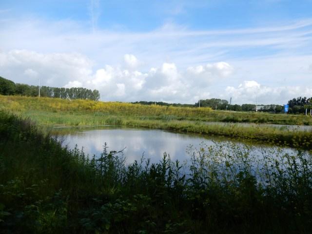 Beemster in Beeld - Natuurgebiedje nabij nieuwe op - en afrit langs de Purmerenderweg