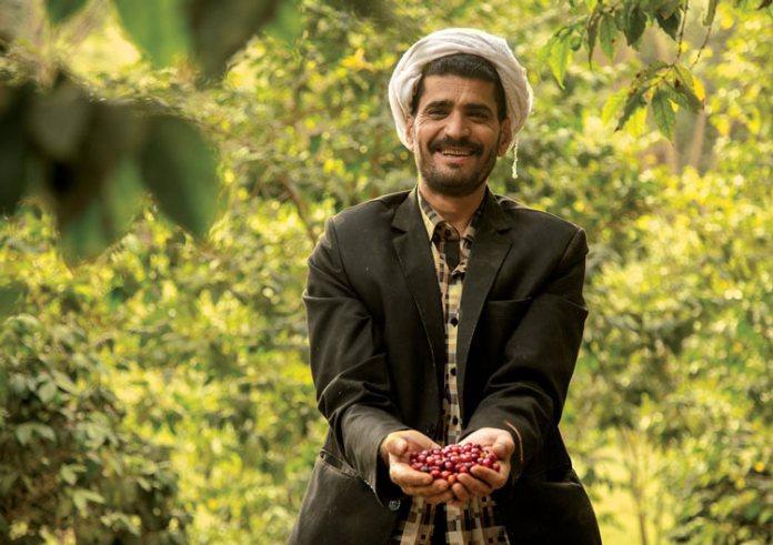 Production de l'arabica au Yémen