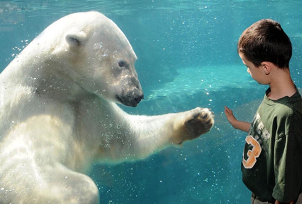 Polar Bears International Bio Digital Marketing