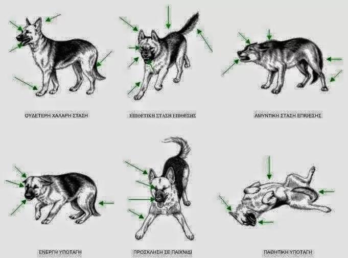 c279910e8597 ΔΕΙΤΕ-Η-γλώσσα-του-σώματος-ενός-σκύλου-01